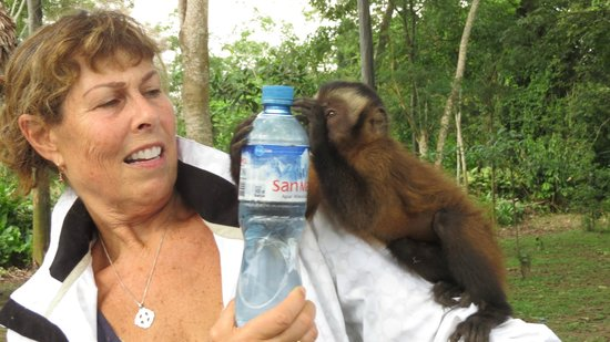 Maniti Expeditions Eco-Lodge & Tours Iquitos: Monkey Island, they get that close to you!
