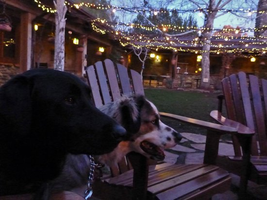 El Portal Sedona Hotel: Dogs on leases are welcome in the courtyard and the rest of the hotel