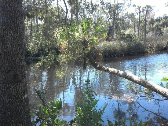 James E Grey Preserve : River