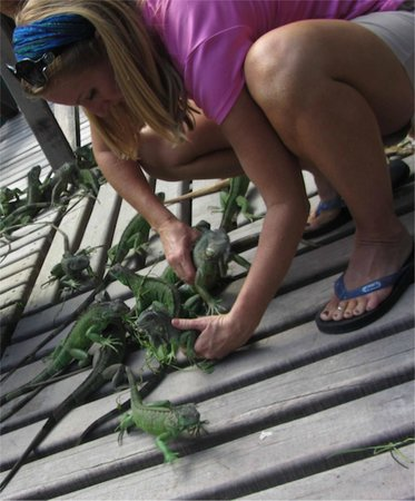 Green Iguana Conservation Project: Hands on fun