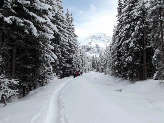 Berghotel Alpenrast: Sentiero ciaspole