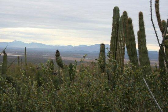 Arizona-Sonora Desert Museum: Desert Museum Tucson
