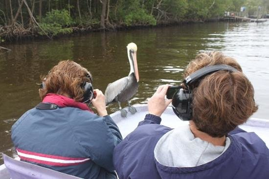 Totch's Everglades Island Airboat Tours : un passager clandestin