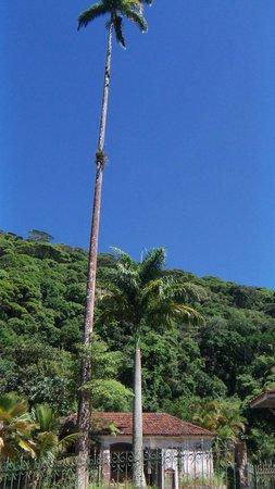 Tijuca National Park: Floresta de Tijuca