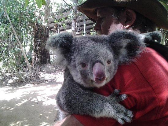 Bungalow Bay Koala Village : Animal 'tour' with Mathilda the koala, and ranger Tony