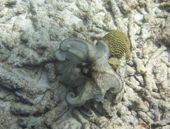 Renee Snorkel Trips: Octopus! Woo Hoo!