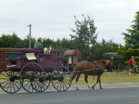 Rail Trail Planner - Day Tours: Middlemarch carriage meeting the Dunedin train
