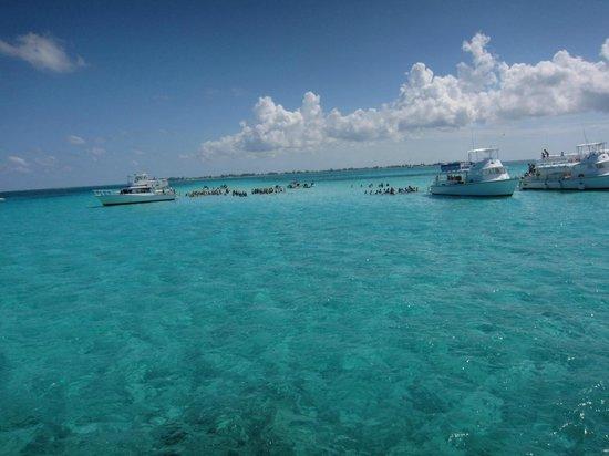 Acquarius Sea Tours: Stingray City , Cayman Islands