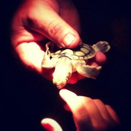 Mon Repos: Turtle!