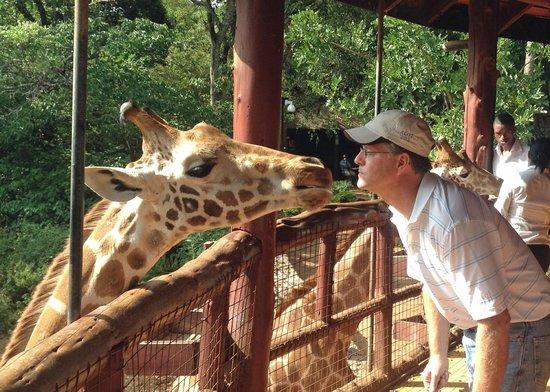 African Fund for Endangered Wildlife (Kenya) Ltd. - Giraffe Centre : Feeding the giraffe