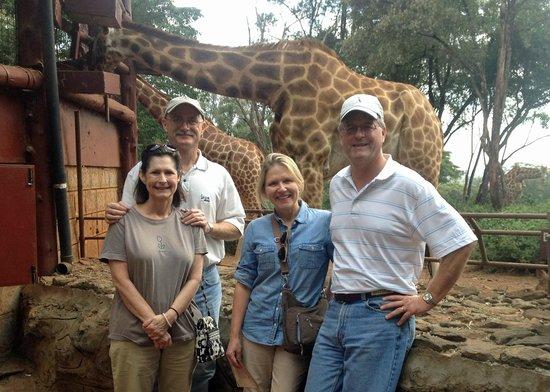 African Fund for Endangered Wildlife (Kenya) Ltd. - Giraffe Centre : Giraffe Center