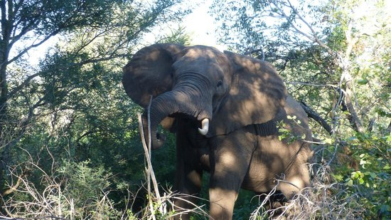 Naledi Bushcamp and Enkoveni Camp : Elephant greeting.