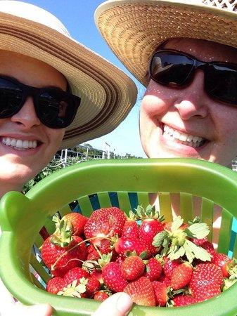 Burr's Berry Farm: Our basket