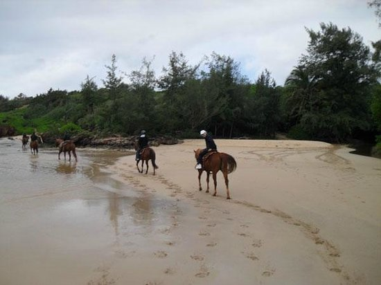 CJM Country Stables : Beach portion of the ride