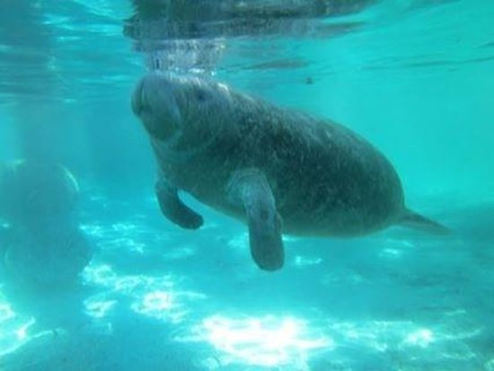 Crystal River Fl Manatee Tour And Dive