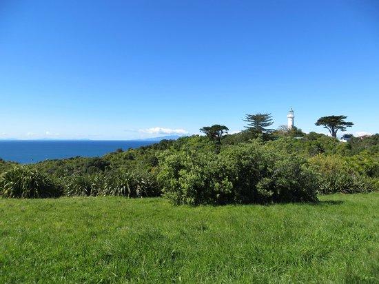 Tiritiri Matangi Island : The view at the highest point of Tiritiri Matangi