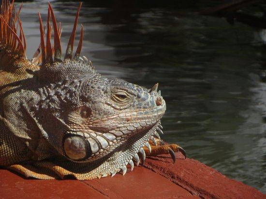 Melia Puerto Vallarta All Inclusive : Lazy Lizard