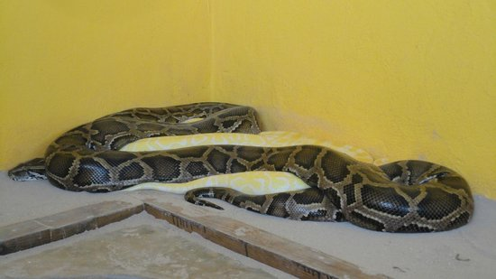 Philip's Animal Garden: Pythons