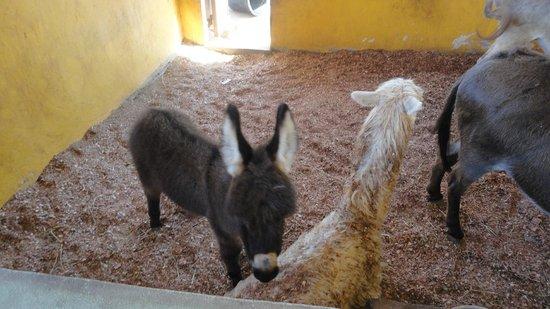 "Philip's Animal Garden: ""Donny"" the baby donkey!"