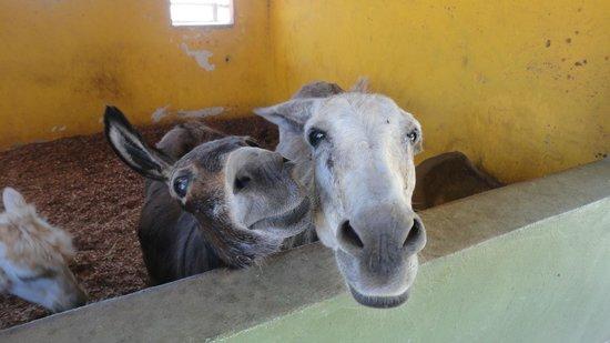 Philip's Animal Garden: Baby donkey and his mom