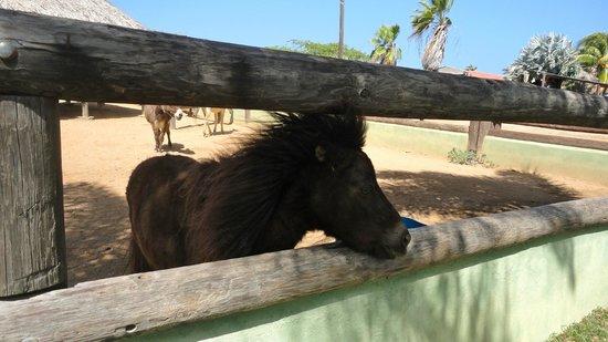 Philip's Animal Garden: Mini-horse