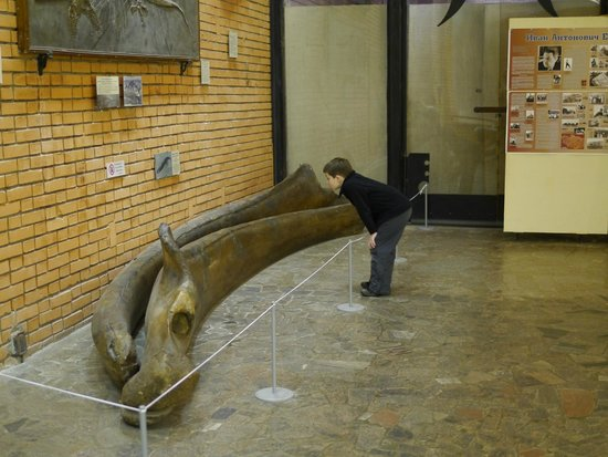 Paleontologic Museum : Кусочек древнего кита!