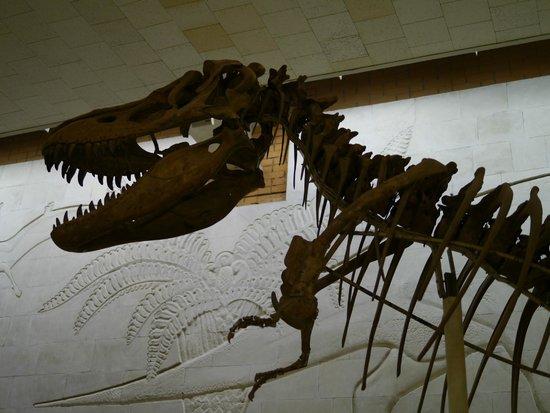 Paleontologic Museum : Большая плотоядная ящерка!