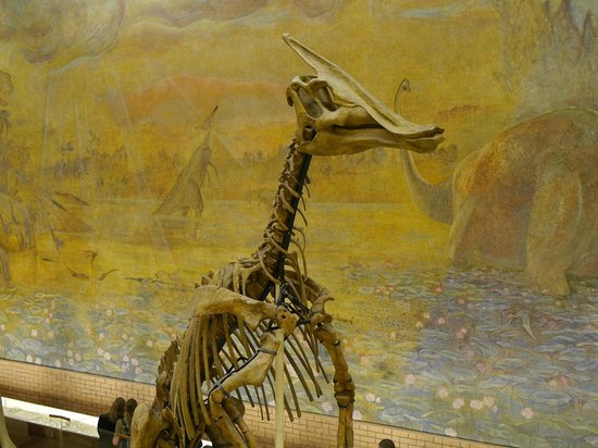 Paleontologic Museum : Еще ящерка!