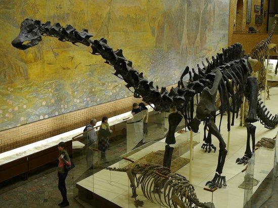 Paleontologic Museum : Большая травоядная ящерка.