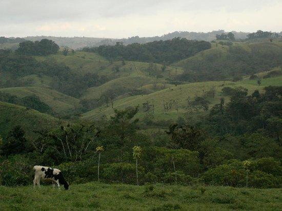 Villa Blanca Cloud Forest Hotel and Nature Reserve: View from milking parlour