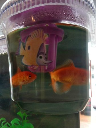 Rotorua Downtown Backpackers : Pet fish