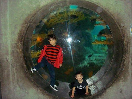 The Florida Aquarium: My son and nephew