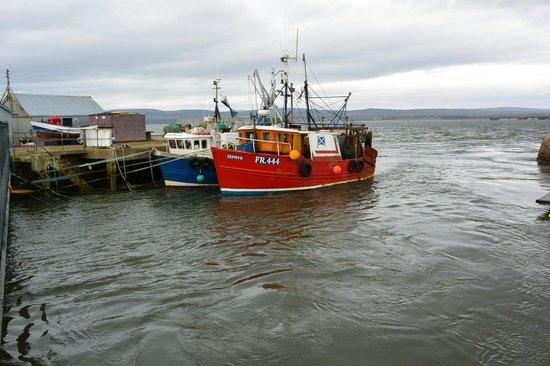 Sutor Creek: Fresh fish caught locally