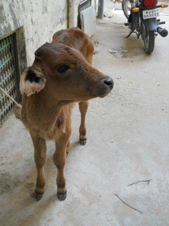 Jagat Villa Guesthouse: la mascota jovencita justo en la entrada del recinto