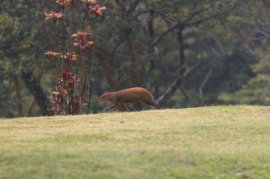 Sunset Hotel Monteverde : exotic animal