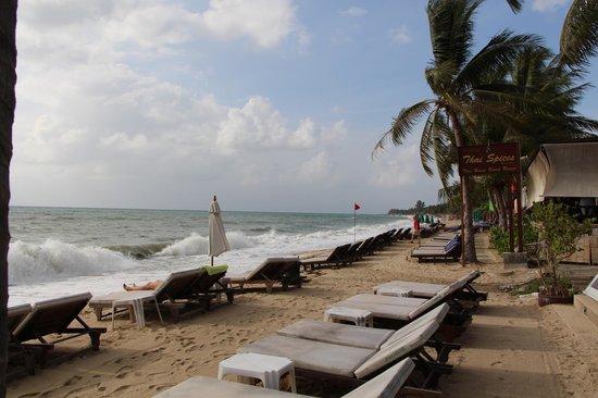 Samui Jasmine Resort : The beach (early morning)