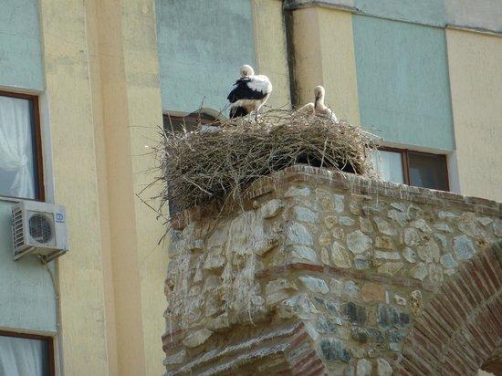 Urkmez Hotel: Nesting Storks