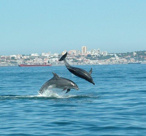 Dolphin Explorers