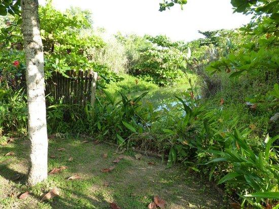 Orchid Garden Eco-Village Belize: The Green Iguana Sanctuary