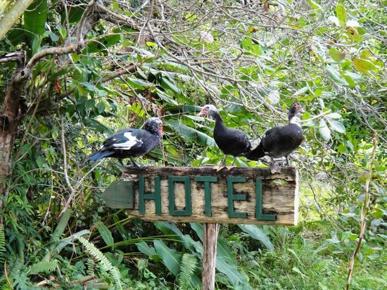 Orchid Garden Eco-Village Belize: Adopted ducks on a hotel sign