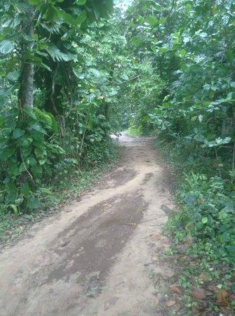 Red Frog Beach : beach path