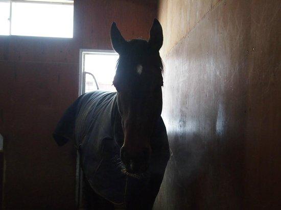 Northern Horse Park: 引退した馬