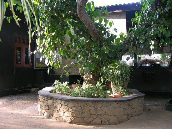 Serena Villa Restaurant: Plants