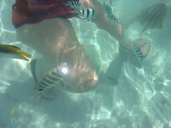 Sofitel Moorea Ia Ora Beach Resort : Haciendo snorkel