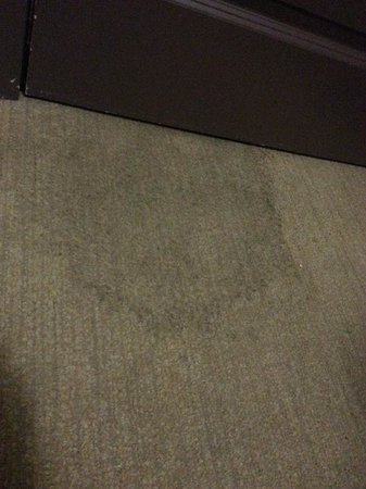 Casa Loma Hotel : dirty carpet