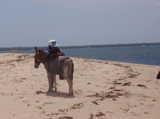 Kizingoni Beach: transport, on the beach