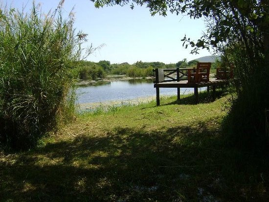 Orchards Farm Cottages : Fishing/viewing deck