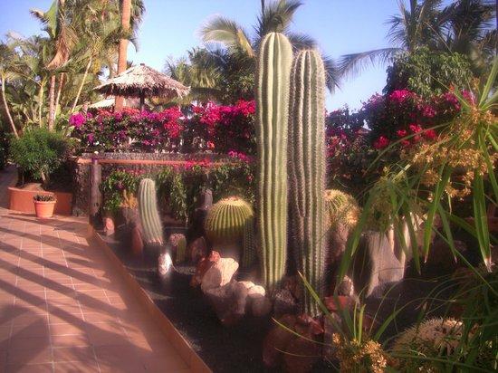 IFA Altamarena Hotel : Herrliche - saubere Gartenanlage
