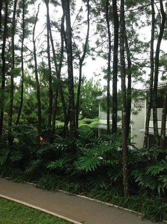Bumi Bandhawa Hotel: view to the back