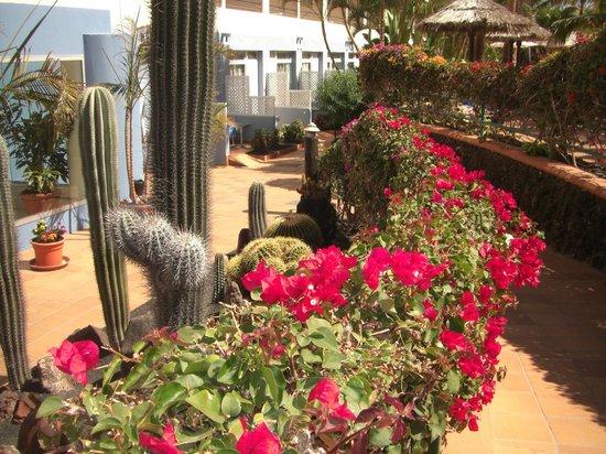 IFA Altamarena Hotel : Gartenanlage - alles blüht - alles sauber